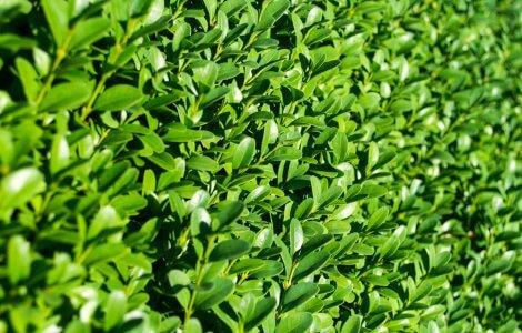 Hedge Trimmer banner