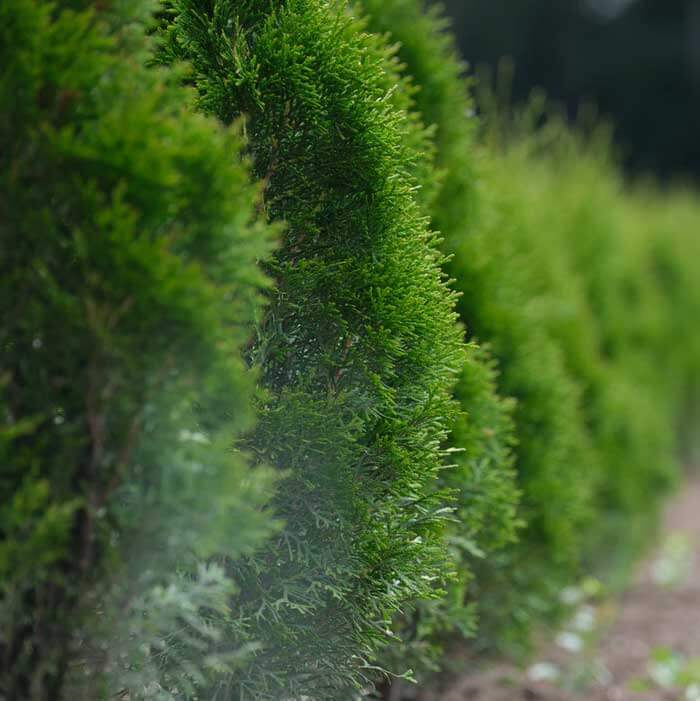 Garden Hedge Trimmer
